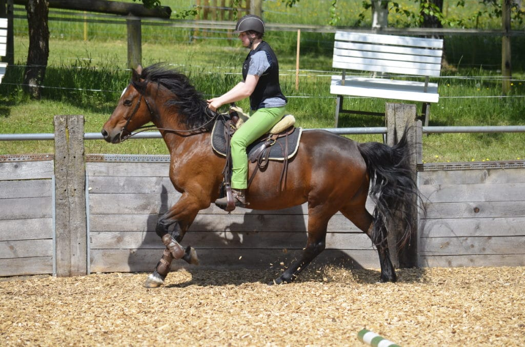 Ranch Riding Birkenhof Pferdepension