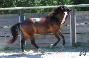 Die zutrauliche Jeannie verzaubert alle mit Ihrem Wesen. Kein Wunder findet sie immer wieder neue Reiterfreunde.